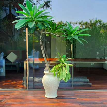 Ming Planter and Champagne Cooler photo gallery 2