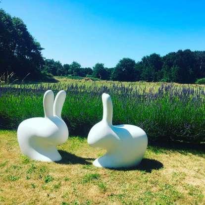 Rabbit Chair photo gallery 3