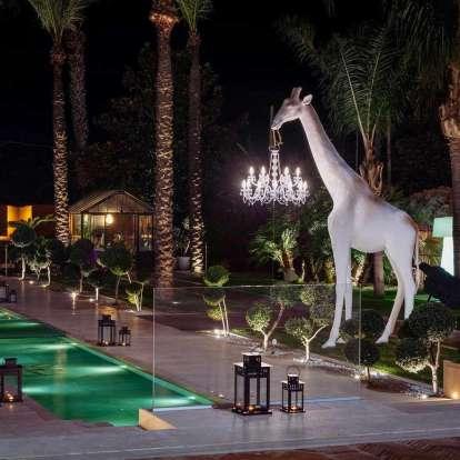 Giraffe in Love Outdoor photo gallery 9